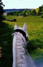 Equestrian(Crush x Reader)  by minyoongisdestiny