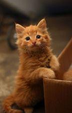 Embers the Kitten by Depressinggreenie