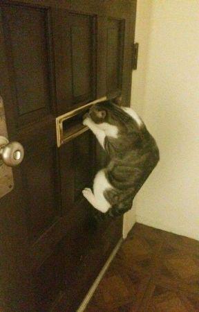 Close the door ~5SOS~ by ixxparole