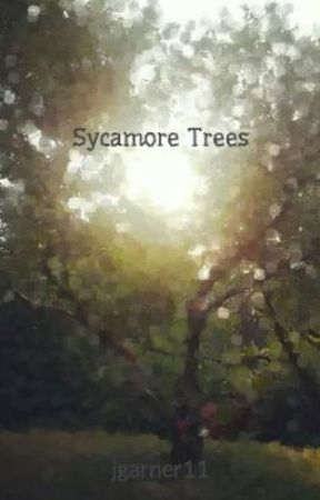 Sycamore Trees by jgarner11
