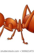 ANT SERIES by PappyJayfresh