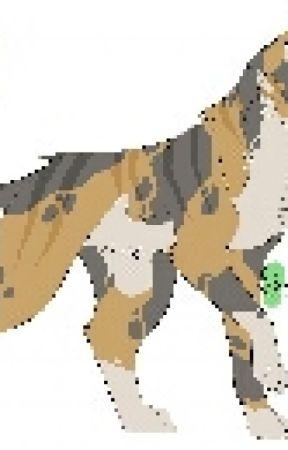 warrior cat rollplay   OPEN by Hizwarrior