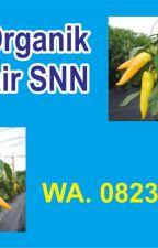 SPECIAL. 0823*2292*4990 pupuk cabe fase vegetatif Tapanuli Selatan by produsenpupukcabe