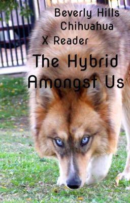Bolt x Dog!Reader - 221B Baker St - Wattpad