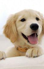 Dog Lovє - (Justin & Tu) One Shot /Terminada by DulceLopezGonzalez