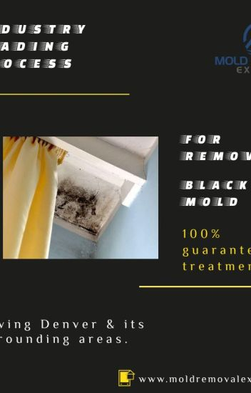 Mold Testing Cost