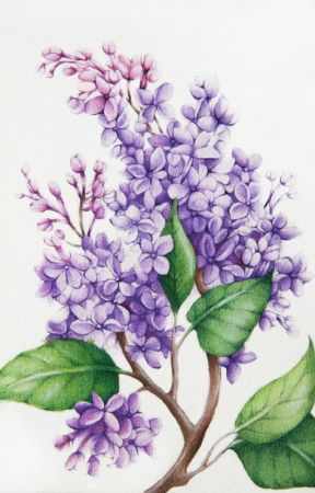 Lilacs and Motorbikes by macaronikencheese