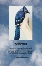 Songbird // Q. Ateara by 1-800-boringbitch