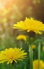 A Pair of Dandelions by Zerolr