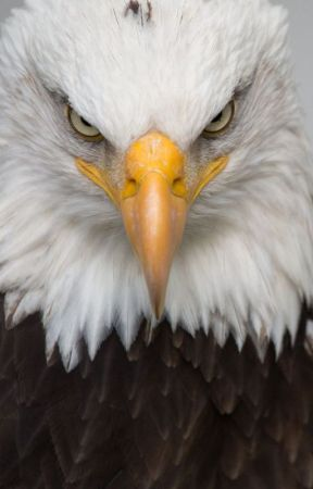HOTE: Home of the Eagles Part 1 by wpina1997