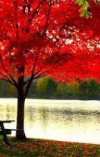 Maple Tree by Alphavilleforever