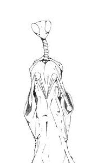 Fear of Mantodea (Yandere Mantis x Reader) - Skele - Wattpad