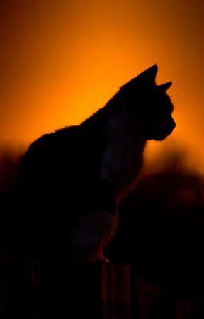 Warrior Cats Name Generator: YouTubers Theme - Tayzi