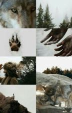 The Snow wolf ( Paul Lahote imprint) by Dawn9779