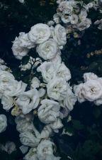 Yaban çiçeği by eolo_eos98
