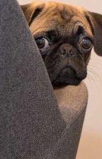 1 kutya èrdekes története🐶 by csengezoltan