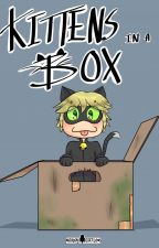 Kittens In A Box - MariChat FANFICTION by Camiliero