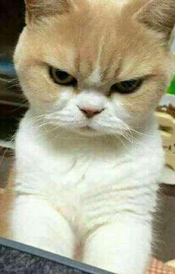 chú mèo thích giận dỗi