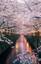 Cherry Blossom Trees by Taekooooookies
