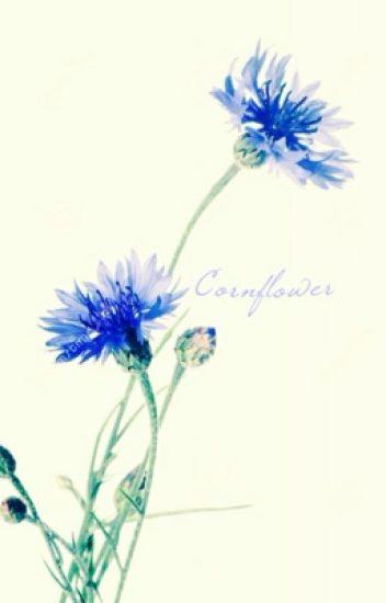 Cornflower (boyxboy)