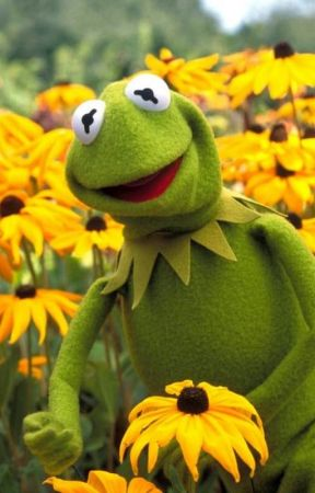 KERMIT & THE MUPPET SHOW [ SOCIAL MEDIA ] -- by mysterious--