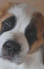 Kutya élet by cseribella