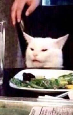 Photo of cat sat a table with a dinner plate with an angry look on its face