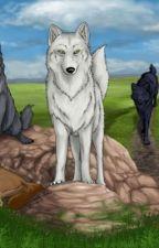 Wolf's rain by black_rose799