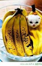 The Story of a banana kitty by Xx_GG_xX