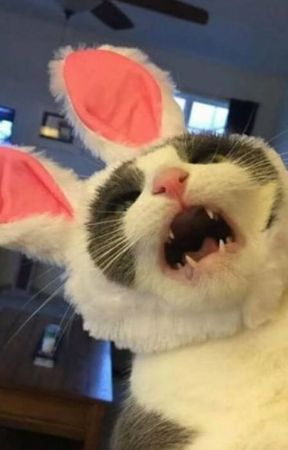 El gato de Yoongi ✿ Blog (Junio, 2019). by susy1599