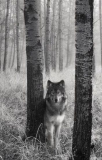 The Wolves in the Woods