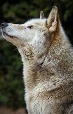 My Idol Is a Werewolf by HaydenGabbard
