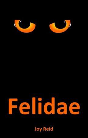 Felidae by joy_reid