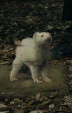 My little ferret  by eatA_brick_mudblood