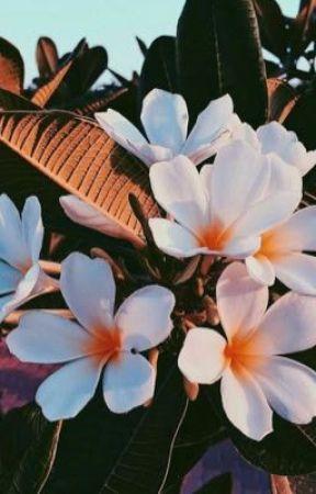 aloha ; jenlisa by aintcoleens