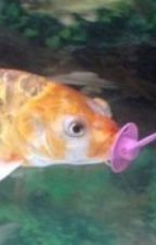 fish with a pacifier by martydoo