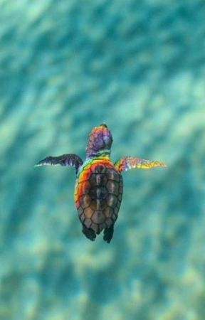 Rainbow Turtle by Nerddyn
