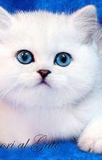 Фанфик про любовь собаки и кота by Foxmouse12