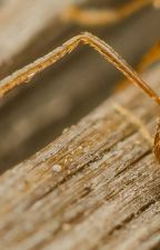 Termite Control Roanoke VA by PestControlRoanokeVA