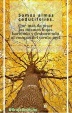 Bosque caducifolio by BareJulit