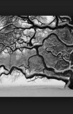White Winter Tree by voiceless
