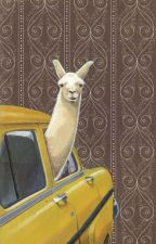 Taxi Llama Larry by channy232
