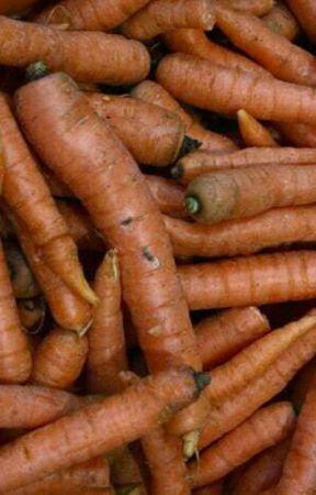 A Carrot by ninadbadade