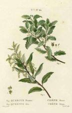 dear me - journal by kookieauthornim