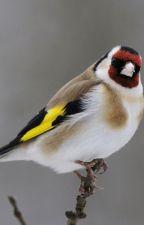 Mes oiseaux favoris by BigBlacksWings