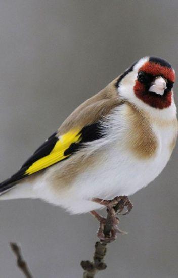 Mes oiseaux favoris