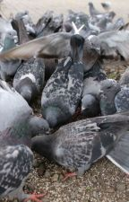 Gołębia przygoda by olkaaawitecka