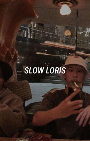 slow loris [minsung]  by cxxdnb