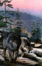 I'm a wolf! Not a werewolf! by savhale