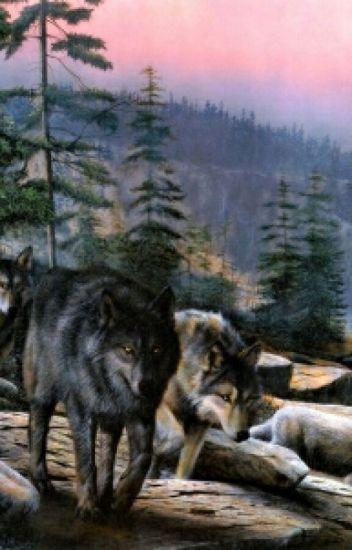 I'm a wolf! Not a werewolf!